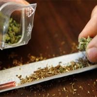 Gana tres mil dólares a la semana por fumar marihuana